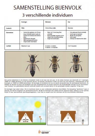 Samenstelling Bijenvolk