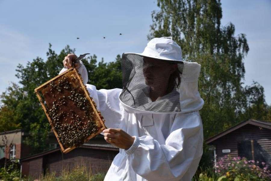 Honeybee Valley Initatie Tot Het Imkeren