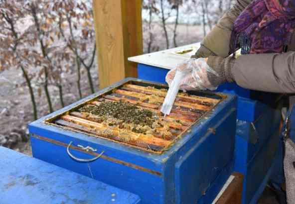 Oxaalzuur bedruppelen als winterbehandeling