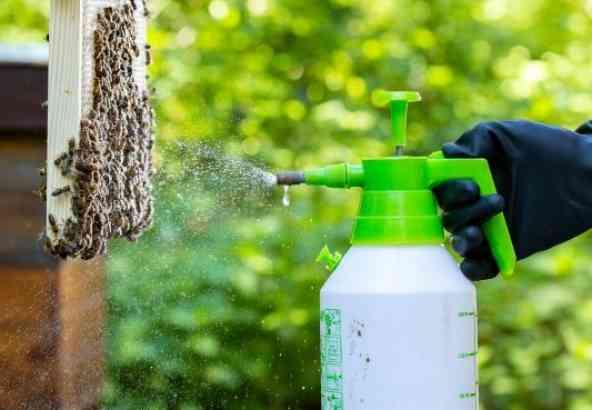 Oxaalzuur sproeien als zomerbehandeling