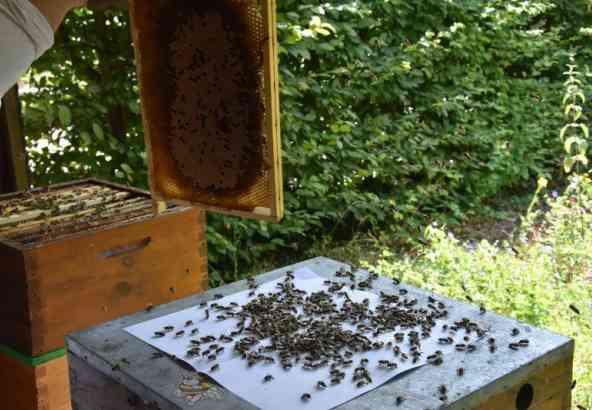 Figuur 1: klop raam met bijen af boven plastic folie of stuk papier