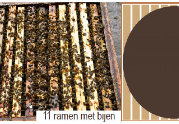 11 ramen met bijen