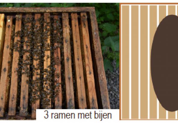 3 ramen met bijen