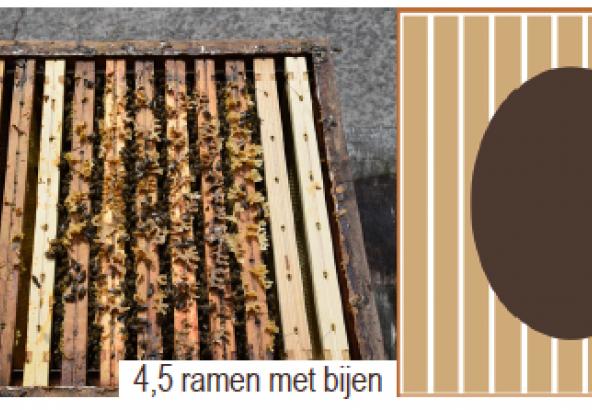4,5 ramen met bijen