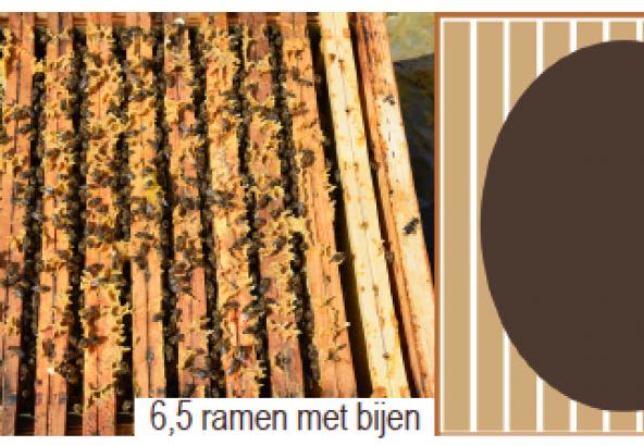 6,5 ramen met bijen