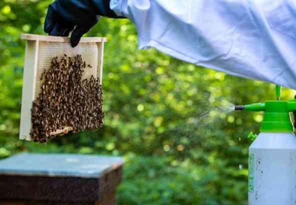 Sproeien van oxaalzuuroplossing op raam met bijen