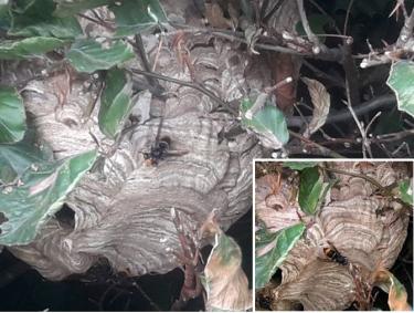 Nest In Evergem