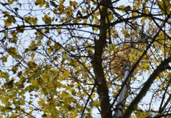 Een lans wordt uitgeschoven. Het is een huzarenstukje om de punt tot in het nest te krijgen. De punt is via een darm die doorheen de lans loopt verbonden met het vat met insecticide. Perslucht stuurt dan een hoeveelheid poeder tot in het nest.