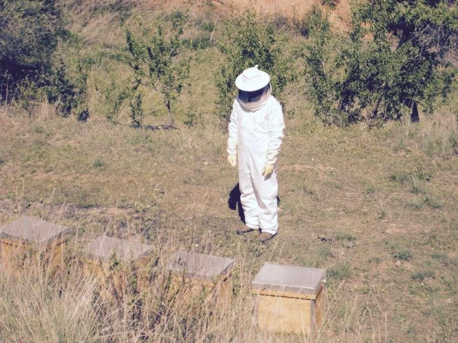 Bee Master Walk