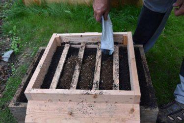 Geert strooit hiervoor een half zakje met 10.000 mijten met voedingsbodem rechtstreeks bovenop de compost.