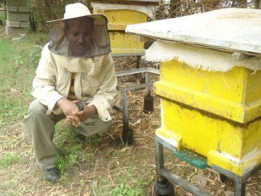 Haftom Bee