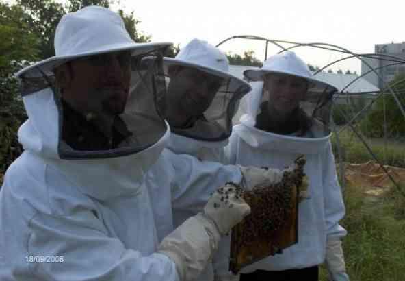 Bijen vangen in de bijenhal van de Sterre (van links naar rechts: dr. Peter Verleyen, dr. Bart Boerjan, dr. Ellen Danneels)