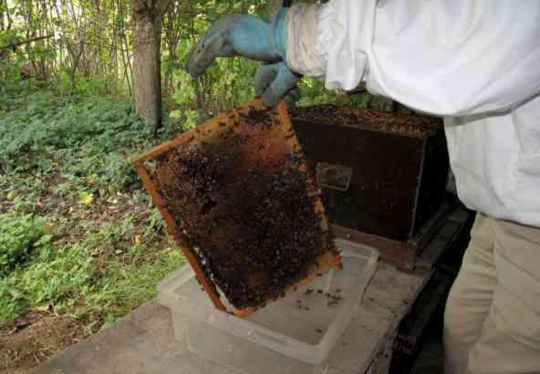 Bijenraam Voor Afschudden