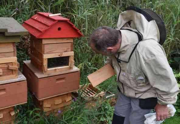 Laat de volgende morgen, zodra de zon opkomt, de bijen los.