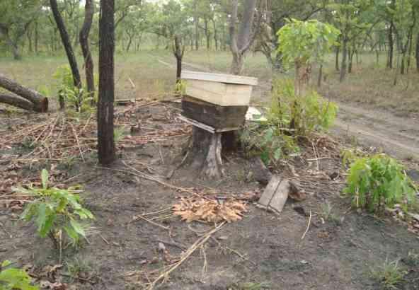 Landschap tijdens droog seizoen in Benin.
