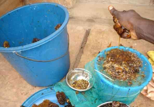 Honing extractie door een lokale imker in Benin.