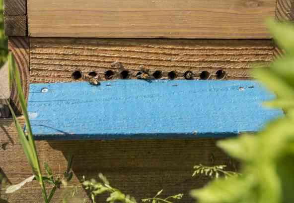 Op een warmere dag kan je soms al bijen buiten zien vliegen voor hun reinigingsvlucht.
