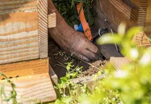 Controleer of de roofmijten nog in leven zijn door wat compost van onder de kast te nemen.