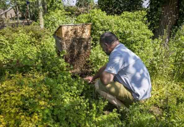 De bijen moeten niet leren lven met de mens, de mens moet terug leren leven met de bij!