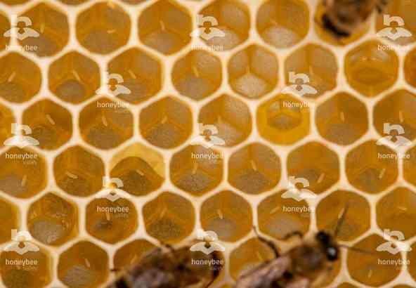 Hbv Foto 039: eitjes van honingbij in wasraat