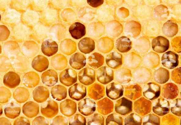 Hbv Foto 006: bijenbroed