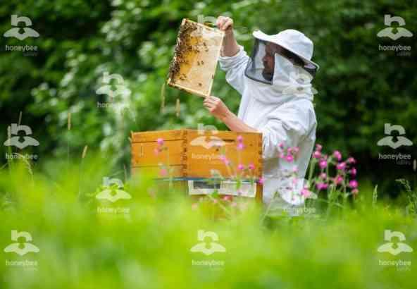 Hbv Foto 010: imker aan bijenkast