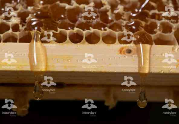 Hbv Foto 031: honing uit honingraat