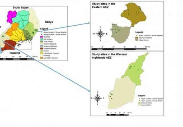 De verspreiding van Amerikaans Vuilbroed in de 2 bestudeerde agro-ecologische zones in Uganda