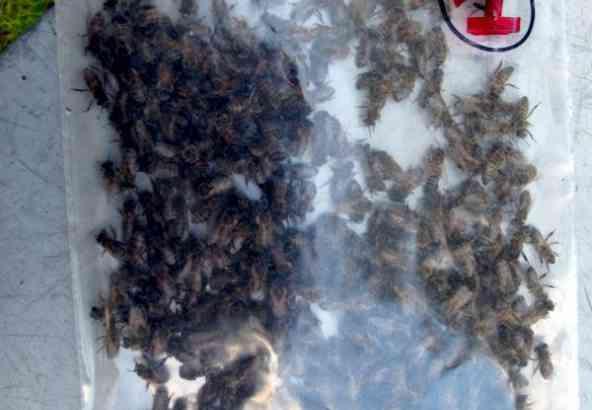 Verzegeld Bijenstaal